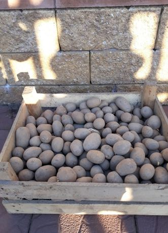Sprzedam ziemniaki LILLY