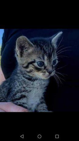 Kociaki szukają domów! :)