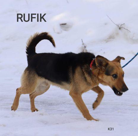 RUFIK łagodny pies szuka domu