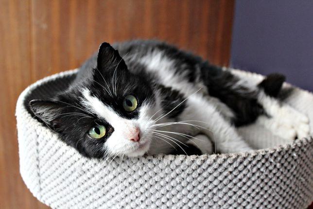 Klara urocza 3 letnia koteczka szuka swojego człowieka