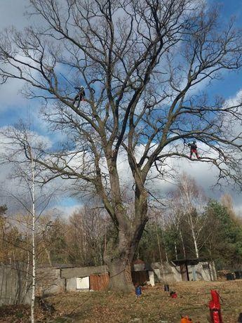 Alpinistyczna pielęgnacja, wycinka, cięcie drzew.