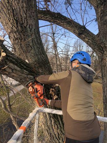 Wycinka drzew alpinistycznie z podnośnika koszowego rebak