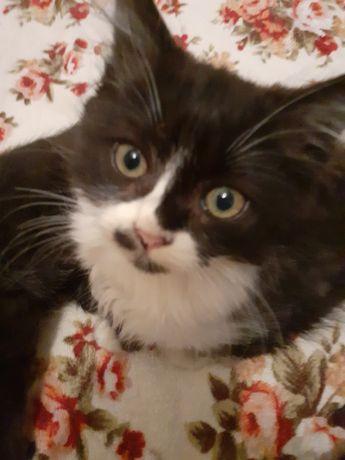 Отдам  котика и кошечку