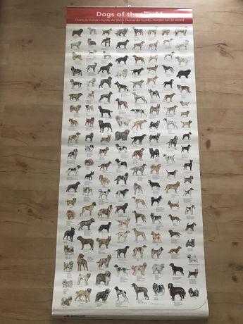 Plakat z psami, rasy psów