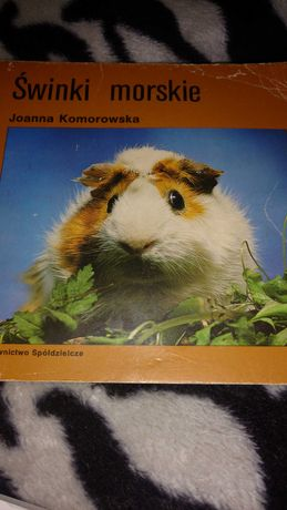 Świnki morskie książka autor Joanna Komorowska