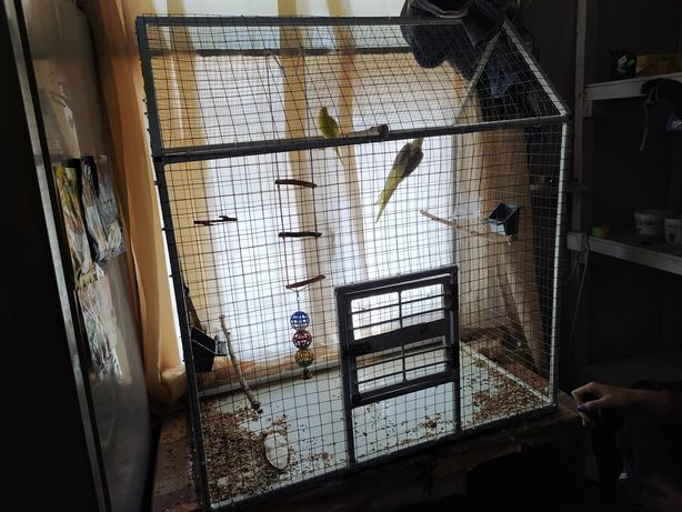 Попугаи корела и волнистые