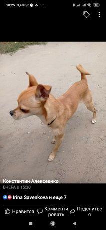 Пропала найдена собака Пески