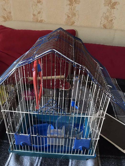 Клетка для попугая , питомца Бердичев - изображение 1