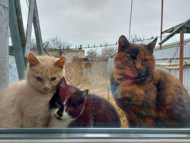 Котята подростки рыжий и черно-белый