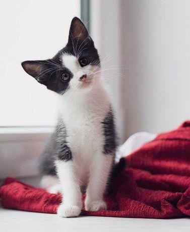 Cudowne kocie stworzenia szukają domów stałych i kochających ludzi