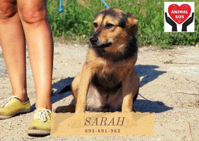SARAH - średniej wielkości, nieśmiała sunia szuka domu