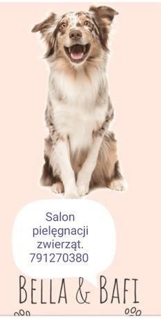 salon dla zwierząt bellaibafi