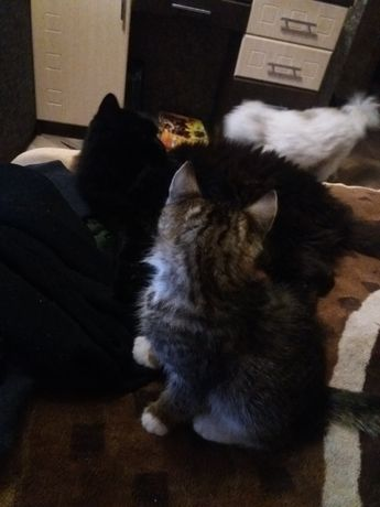 Отдам котенка в хорощие руки