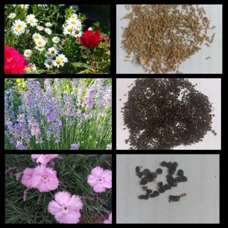 Семена садовых цветов: многолетние, однолетние, двухлетние.