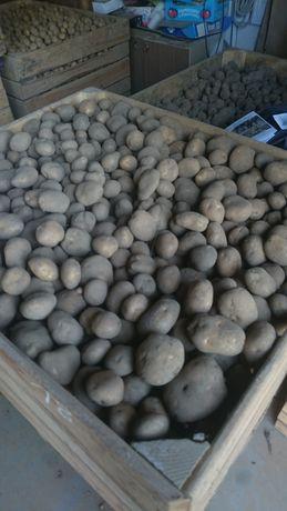 Ziemniaki lord, vineta, bellarosa, denar , julinka. Wystawiam FV