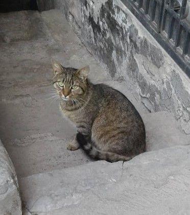Мурасик чекає на дім