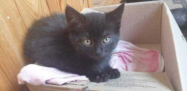 Чорный котик ваш оберег ищет дом