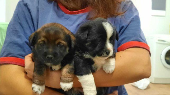 Віддам чудових собачок-дівчаток в добрі руки