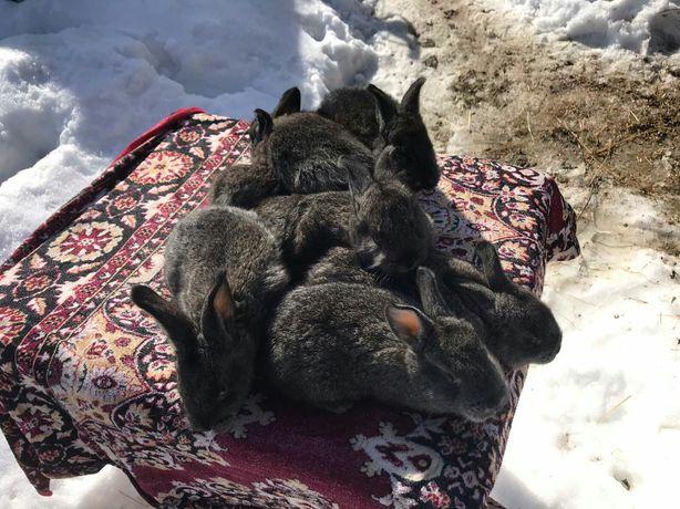 Продаються кролі