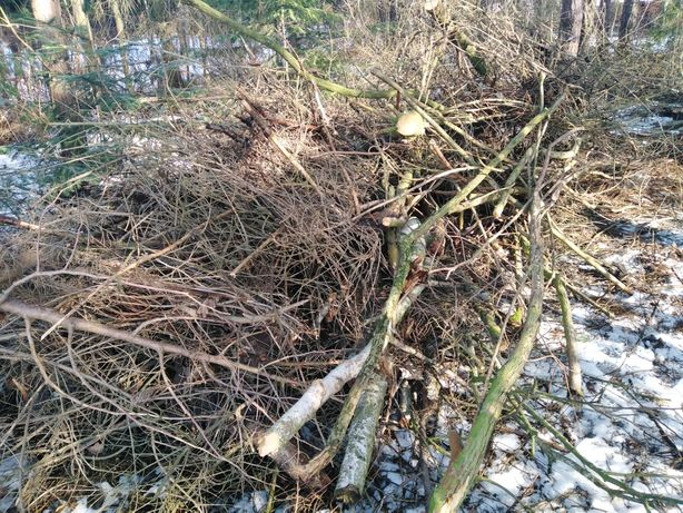 Gałęzie, konary po wycince darmo Tuszyn