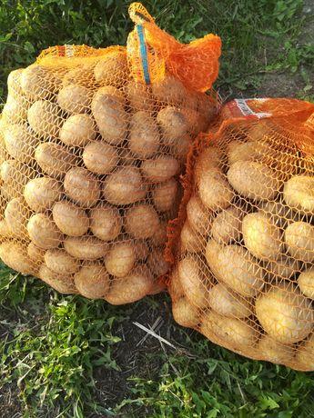 Ziemniak jadalne 25kg, DOWÓZ