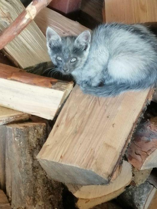Oddam małe kotki Tomaszów Lubelski - image 1