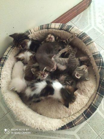 Gatinhos precisam de um dono