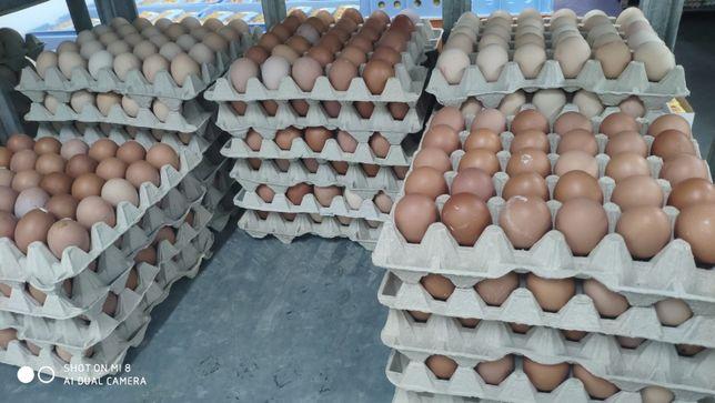 Jajka konsumpcyjne