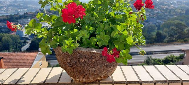 Vaso em cortiça e planta natural