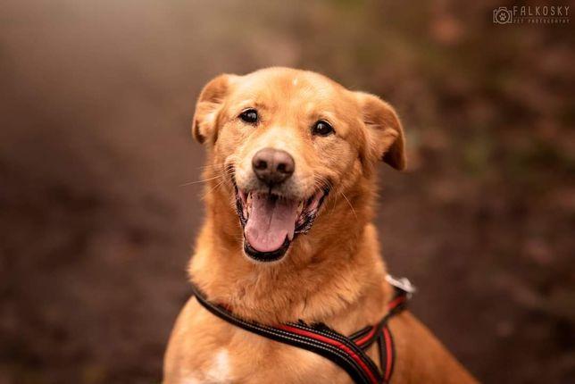 Kazik uśmiechnięty cudny pies!