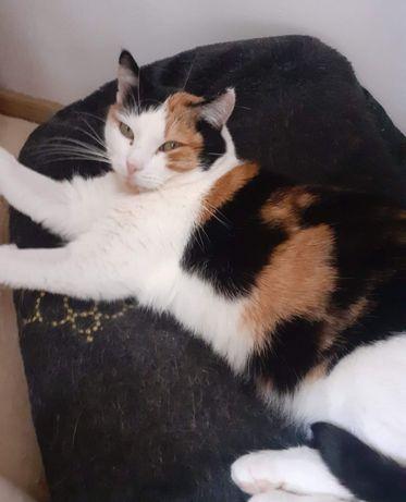 Kotka Foczka bardzo potrzebuje spokojnego domu
