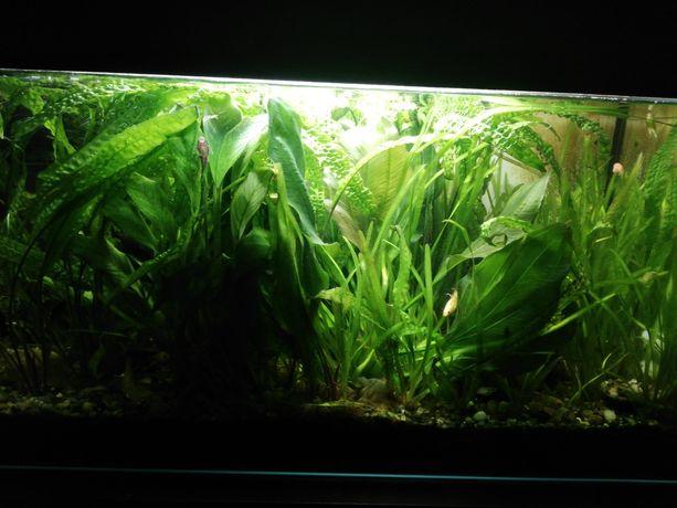 Roślinki do akwarium