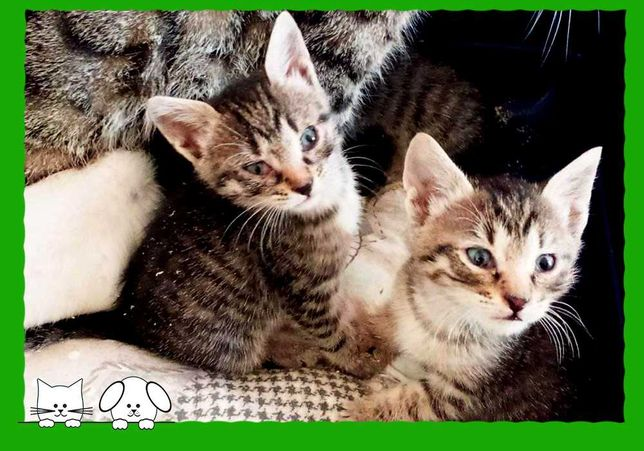 котенок из приюта Одесса
