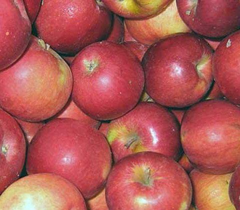 Яблука зимові Айдаред