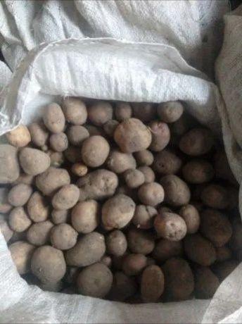 100кг.Дрібна картопля на корм ТВАРИНАМ. Безкоштовна доставка