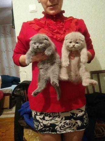 Шикарные вислоухие котята