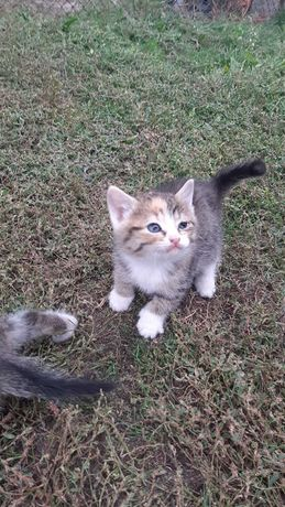 Отдам даром 2 котят