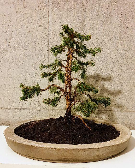 Doniczka betonowa bonsai Iława - image 1