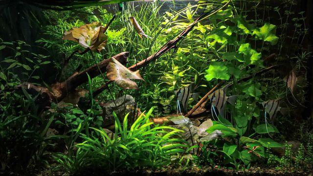 Rośliny akwariowe, różne gatunki