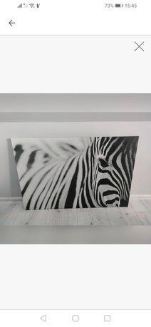 Obraz Duży zebra Ikea