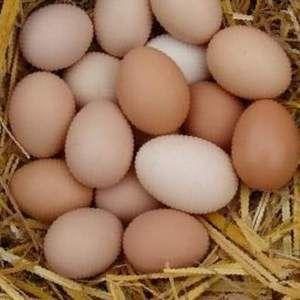 Инкубационное яйцо Кобб 500, а так же...