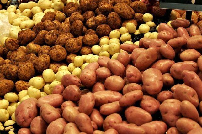 Продаю картоплю з доставкою