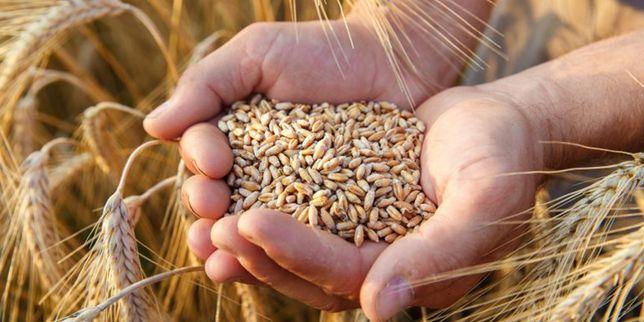 Продам тону пшеници