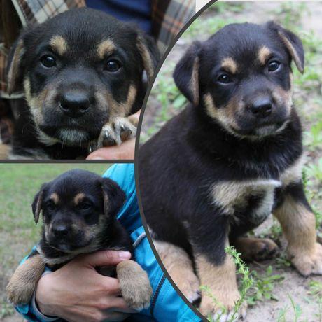 Красавице собачке (девочка) нужен дом, 2 мес, щенок, щенки