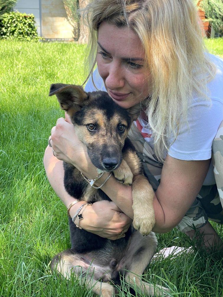 Поль 5 месяцев. Щенок собака собачка пёс щеня
