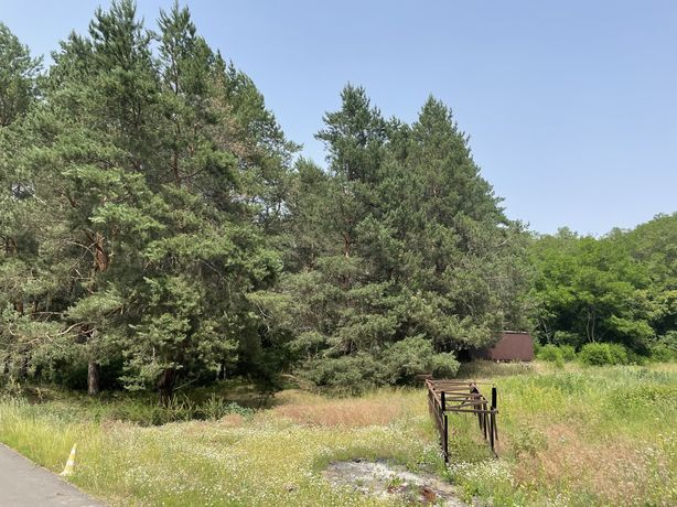 Земельный участок 16 соток в сосновом лесу
