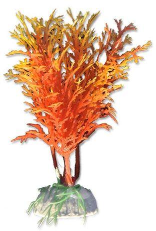 Roślina blister 10cm 1b22 Happet