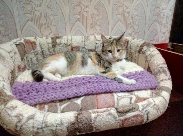 Лежак для кошки или собаки
