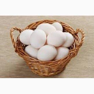 Инкубационное яйцо несушек бройлеров