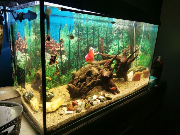 Akwarium zestaw z pompa aquael